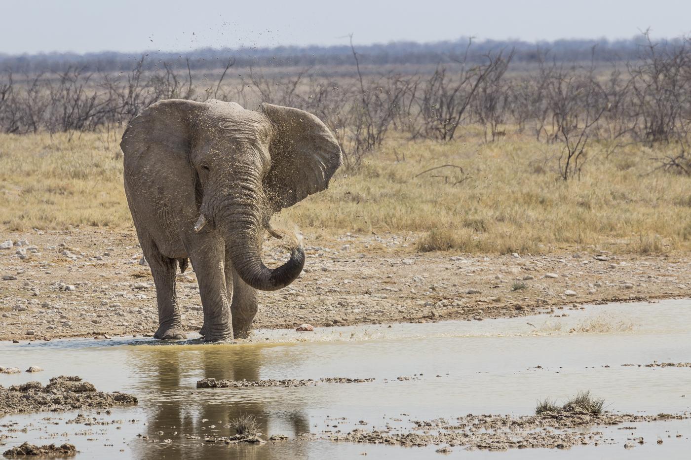 Elefantendusche - Etosha Nationalpark